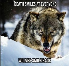 I have done it so many times! It's gotten to the point that it ain't luck. Ever since childhood I have stared at death himself and winked. Every time I have come out unscathed, It isn't my time. Wolf Qoutes, Lone Wolf Quotes, Wolf Spirit, My Spirit Animal, Animals And Pets, Cute Animals, Saarloos, Wolf Stuff, Wolf Wallpaper