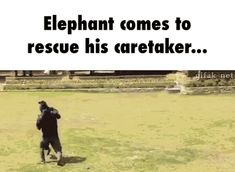 Elephant comes to rescue his caretaker... GIF