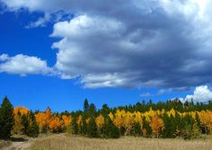 Colorado-love the aspens turning in the background :)