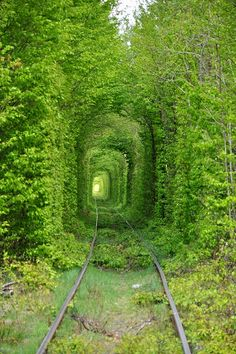 """Amazing """"Tunnel of Love"""" in Rivne..Looks like something off a Harry Potter Movie"""