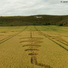 Crop Circle at Alton Barnes White Horse, Alton, Wiltshire, UK, photo by Janet Ossebaard