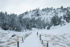 trekking course    Winter scenery of Kitayatsugatake