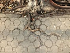 Tree and sidewalk merge