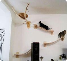 Parque diversiones para gatos