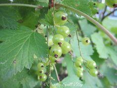 #berries #summer #finland