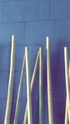 #bambú #Cañas #palos #Azucar