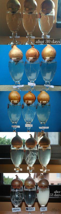 Aurul Lichid Apa eSpring Demo Onion Experiment eSpring Water Amway