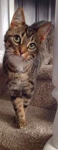 OMG .... this look   #cat kitty kitten cute amazing AWW #photo by https://plus.google.com/u/0/communities/100979042000278916261