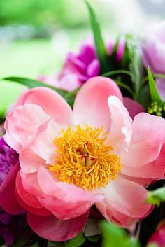 Katie Spicer Photography for Flowerona - Peony - Sabine Darrall