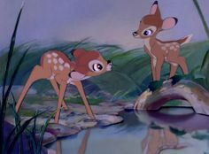 Screencap Gallery for Bambi Bluray, Disney Classics). The animated story of Bambi, a young deer hailed as the 'Prince of the Forest' at his birth. As Bambi grows, he makes friends with the other animals of the Bambi Disney, Disney Pixar, Disney And Dreamworks, Disney Kunst, Arte Disney, Disney Magic, Disney Art, Life Quotes Disney, Best Disney Quotes