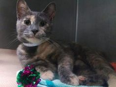 *** TO BE DESTROYED 07/26/17 *** One year old, SPAYED, gentle with kids, lived with a small dog....LUCKY is the complete package. CHANGE HER LUCK TONIGHT & FOSTER or ADOPT!!