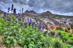 Wildflowers in Yankee Boy Basin near Ouray, Coloado.  See our journey at http://www.backroadswest.com/blog/san-juan-mountains-wildflower-bloom/