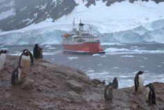 Neko Harbor, Antarctica  Jenny S.W. Lee Photography  www.jennyswl-art.com