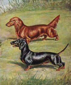 Dachshund Vintage Color Dog Print Matted | eBay