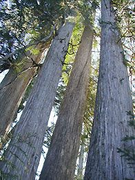 Washington Native Plant Society: Education