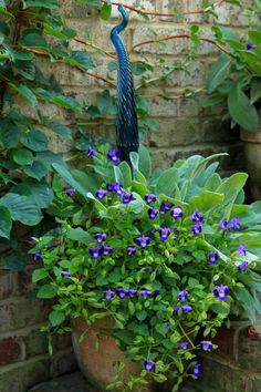 Torenia 'Purple Moon', 'Silver Carpet' Lambs Ear, ...