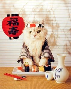 ⚜️ Add charm to your home with Sushi Cat Wall Decor Japanese Cute Funny Kitten Art Print Poster from I Love Cats, Crazy Cats, Cool Cats, Cute Kittens, Cats And Kittens, Kitty Cats, Ragdoll Kittens, Tabby Cats, Bengal Cats