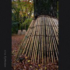 https://flic.kr/p/PxJH7A | 下鴨神社にて | Kyoto Sjimogamo-jinjya shrine , JAPAN , Sony Alpha 7r2 , MS Optics REIROAL 1.4/35 F.MC 木の根を守っているのでしょうか、、、ちょっと変わった感じ。