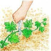 Das Kneifen der Zucchini - My WordPress Website Potager Bio, Potager Garden, Herb Garden, Vegetable Garden, Home And Garden, Organic Gardening, Gardening Tips, Zucchini, Garden Online