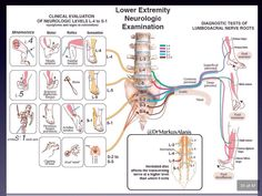 Evaluación clínica de los niveles neurológicos L-4 a S-1 #Medicina #ENARM2015 #MIR #2MIR15 #2MIR16 #FOAMed #MedEd Examen Clinique, Nerve Anatomy, Physical Therapy Student, Spine Health, Medical Anatomy, Human Anatomy And Physiology, Chiropractic Care, Massage Techniques, Nerve Pain