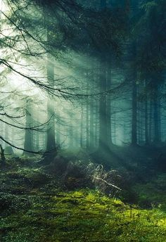 The 30 Most Beautiful Nature Photography. Magic in the forest, by Image Nature, All Nature, Beauty Of Nature, Nature Source, Nature Tree, Nature Quotes, Nature Images, Amazing Nature, Belle Photo
