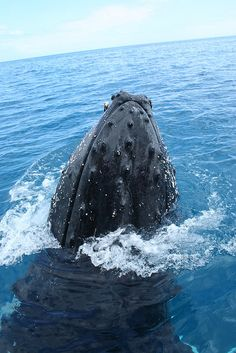 Humpback whale, wow, to be that close