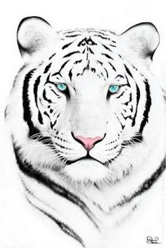 White tiger face | okie_dokie_artichokie | Flickr