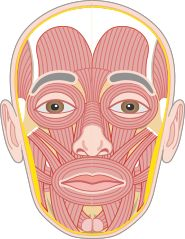 An Online Examination of Human Anatomy and Physiology Facial Anatomy, Anatomy Coloring Book, School Plan, Pa School, High School, Human Body Systems, Human Anatomy And Physiology, Text Animation, Fitness Gifts