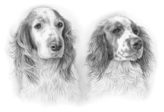pet portraits, pet portraits in pencil, pet portraits in graphite, pet portrait artists, pencil pet portraits, car portraits