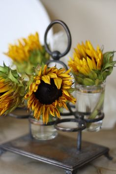 {sunflowers are always perfect.}