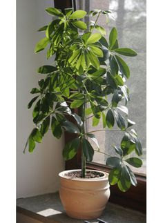 My favorite plant as a kid!! I am definitely getting one of these for my future house!