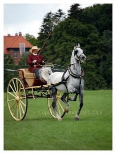 dapple grey horse and carriage...I want this to be me...but in a more casual outfit!