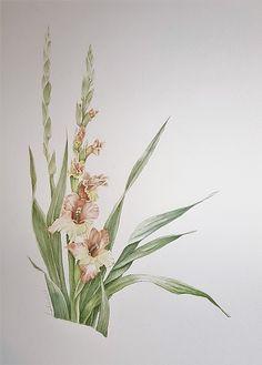 Gladiolus by Gal Reb