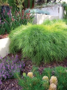 Search this vital image in order to visit the provided info on Dyi Landscaping Ideas Landscaping Plants, Sloped Garden, Waterwise Landscaping, Australian Garden Design, Australian Native Plants, Native Garden, Australian Native Garden, Garden Planning, Garden Design