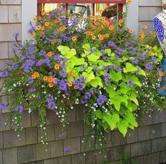 Amazing Summer Planter Ideas To Beautify Your Home 44