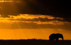 Elephant Birds and Sunset - null