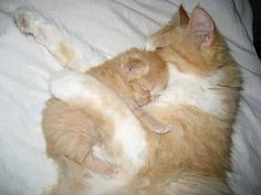 Mommy and kitty snuggle time