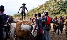 Dit is een afrikaans overgangs ritueel om een man te worden. De adolsecent jongens moeten dan naakt op koeien springen.