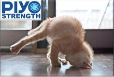 PiYo kitty