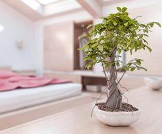 Quais as melhores plantas segundo o Feng Shui