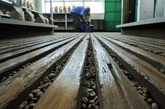 Coffee factory, Nairobi