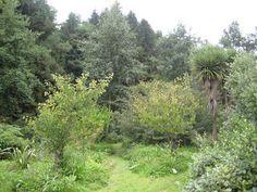 Gartdener: Forest Gardening in Totnes