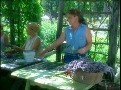 Watch Martha Stewart's Growing Lavender at the Peconic River Herb Farm Video. Get more step-by-step instructions and how to's from Martha Stewart.