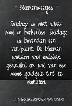 Bloemenweetjes. Solidago.     This quote courtesy of @Pinstamatic (http://pinstamatic.com)