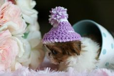 OMG...how precious is this little Shih Tzu puppy!!