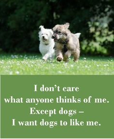 Some Helpful Ideas For Training Your Dog Pug Quotes, Animal Quotes, Puppy Care, Dog Care, Puppies And Kitties, Pet Dogs, Funny Dogs, Funny Animals, Adorable Animals