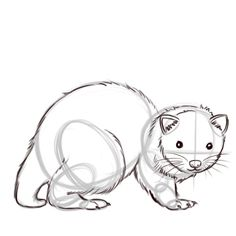 How to Draw a Ferret: 8 Steps (with Pictures) - wikiHow
