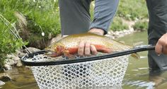 Who doesn't love another really good fly fishing video?