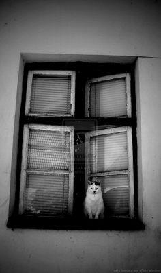 Cats looking out of the window