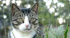 Please share.......lets help find these criminals https://www.alleycat.org/sslpage.aspx?pid=1653  PR - 04/25/2014 - Alley Cat Allies Offers $750 Reward in Yonkers, NY Animal Cruelty... www.alleycat.org